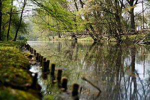Bomen bij het water