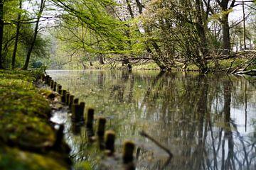 Bomen bij het water van David Muntinga