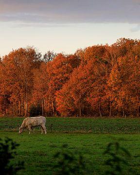 Wiese im Herbst von Paul Gerard