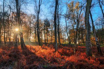 Zonsopkomst in het bos in de herfst met blauwe lucht von Dennis van de Water