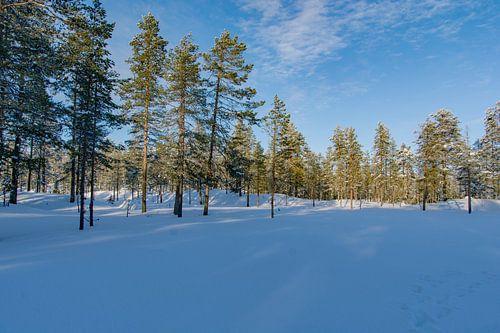 Schitterend sneeuwlandschap