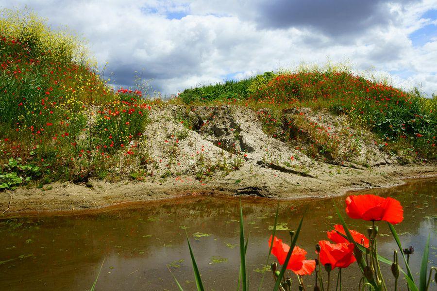 Heuvel met klaprozen en koolzaad van Michel van Kooten