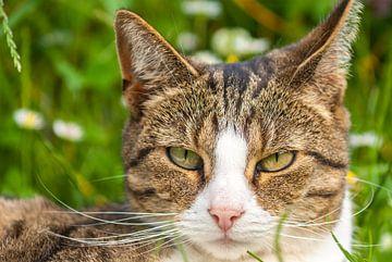 Katze im Gras liegen von Ferry Kalthof