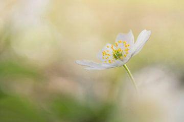 Spring feelings van Birgitte Bergman