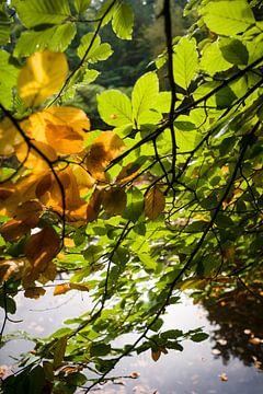 Romantische sfeervolle herfstfoto met uitzicht op het water  van Fotografiecor .nl
