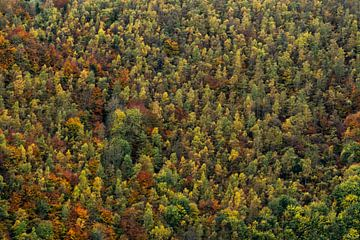 Herbstlicher Wald von Axel Weidner