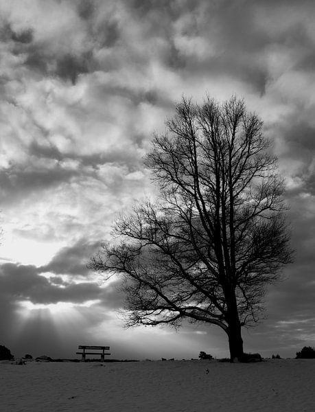 Zitten bij de boom van Martzen Fotografie