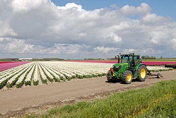 Tractor voor een tulpenveld van
