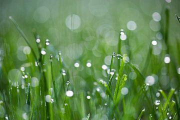 dauwdruppels in gras van Kristof Ven