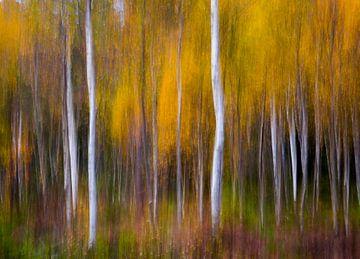 Abstracte Fall, Andreas Christensen van 1x