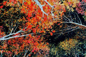 Bont bladerdak van Corinne Welp