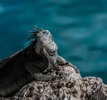 Jura-Leben auf Curacao von Marjon Boerman