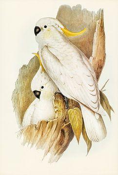 Grote geelkuifkaketoe ca. 1804-1841 van Rudy en Gisela Schlechter
