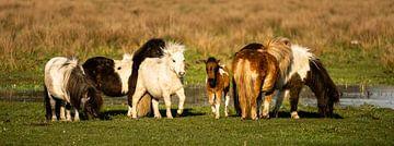 Pony-Panorama von Jeroen Mikkers