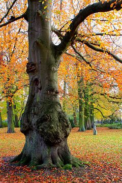 Der knorrige Baum van Ostsee Bilder