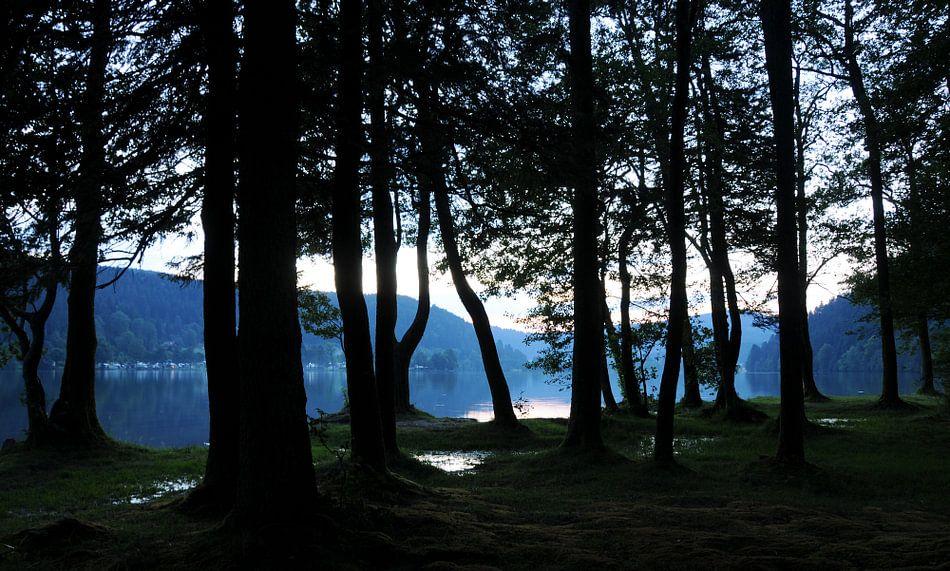 Bomenrij aan meer in de Vogezen (Frankrijk)