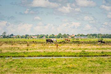 Die Niederlande mit ihren Wolken und Kühen von Caroline Pleysier
