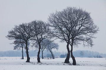 Winterse bomen bij Coevorden. van Rens Kromhout