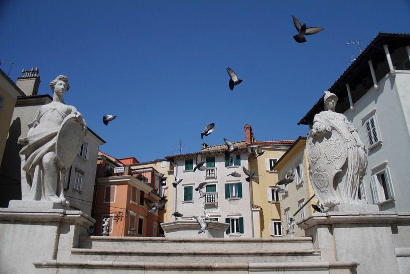 Piran Pigeons van BL Photography