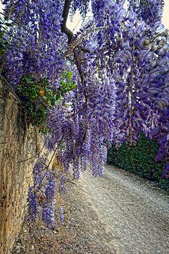 Abondance florale van