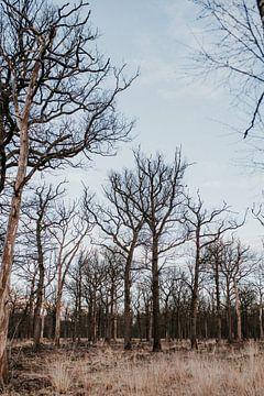Duister bos   Arnhem, Nederland (Holland) van Trix Leeflang