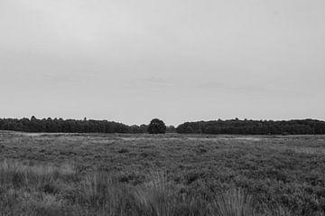Landschap BW von Cor Bak