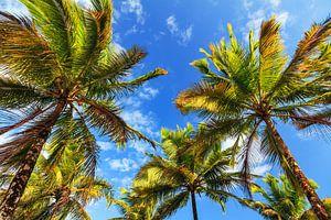 Zomerse palmen Madagaskar