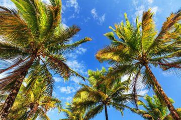 Zomerse palmen Madagaskar  van Dennis van de Water