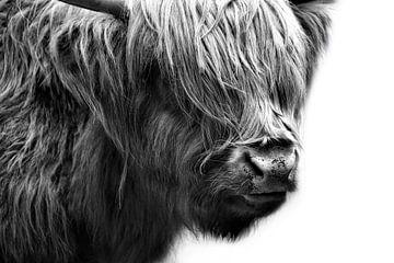 Schotse Hooglanden Vee van Claudia Moeckel