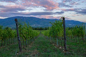 Wijnvelden in Toscane, Italië wolkenlucht tijdens zonsondergang van Discover Dutch Nature