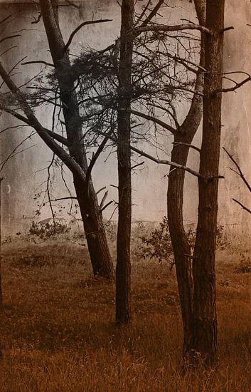 Wald im dunklen Herbst