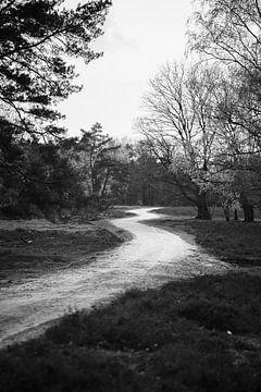 Landschap Wezepsche Heide van S van Wezep