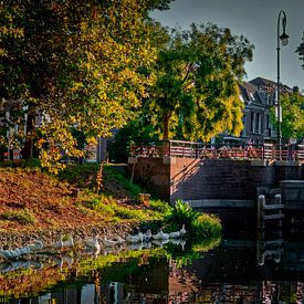 geese in the city van Robin Pics
