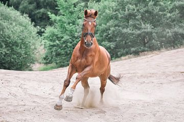 galopperend paard van Lisan Geerts