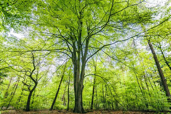 Groene bomen in het bos.