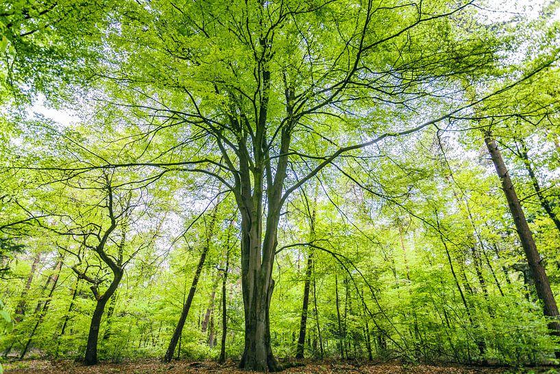 Groene bomen in het bos. van Karel Pops