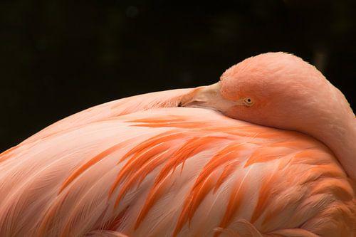 Flamingo neemt een moment rust van Koop je Canvas