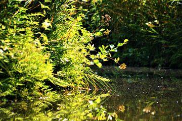 Nieuwkoopse waterkant von David van Coowijk