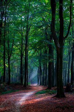 Herfst in het Speulderbos von Kim Claessen