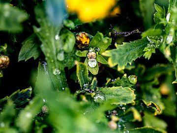 De regen verandert het uiterlijk van de planten van Harald Schottner