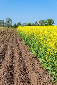 Nederlands landschap met geploegde akker en geel bloeiend koolzaadveld van Ben Schonewille