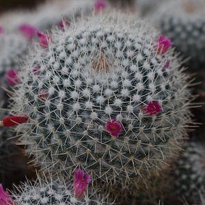 Der Kaktus von Elke Dag Een Foto