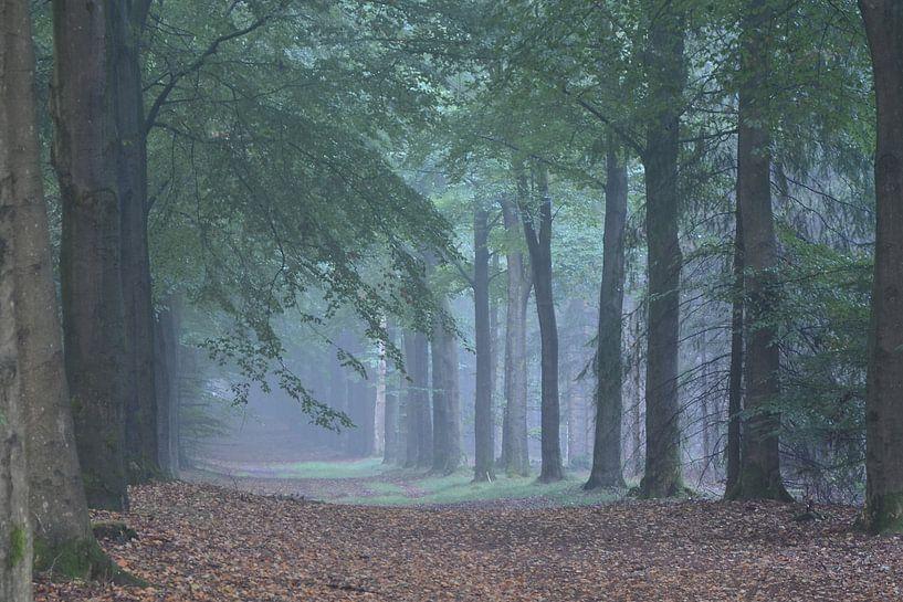 Misty forrest von Rene Mensen