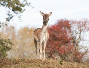 Deer at the AWD von