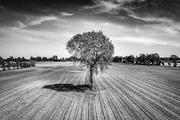 Baum auf dem Land mit einer Drohne fotografiert von Pierre Verhoeven