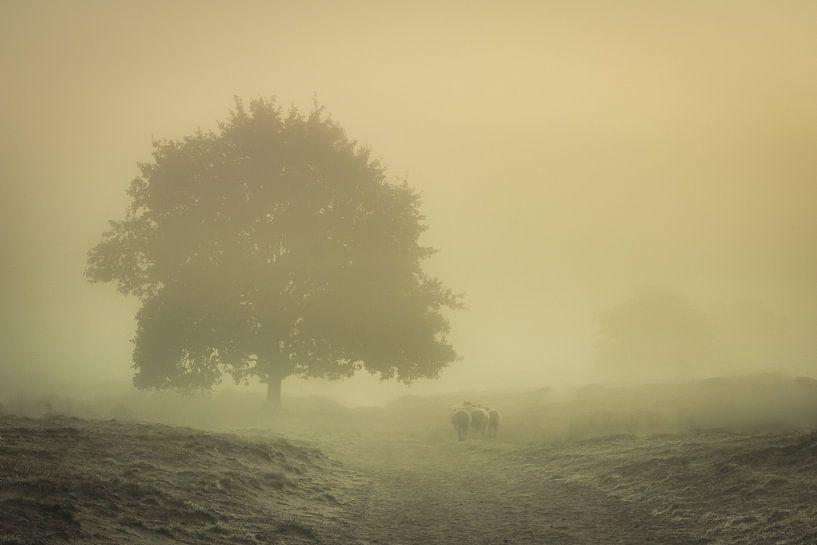 Schapen in de mist van Martzen Fotografie