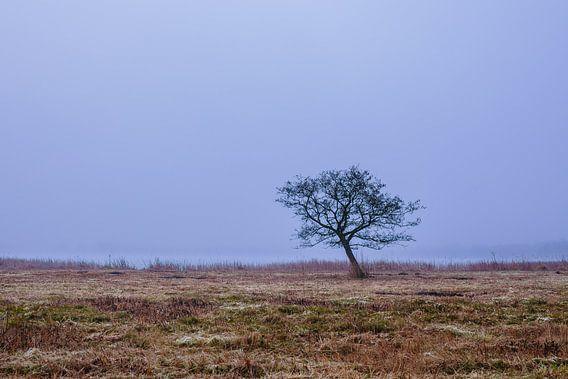 Karakteristieke boom aan de waterkant