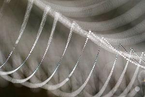 Detail van een bedauwde spinnenweb.