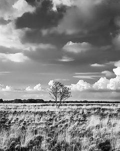 Das Dwingelderveld in Schwarz-weiß