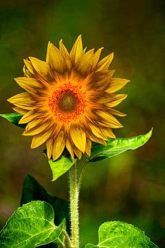 abstrakte Sonnenblume van